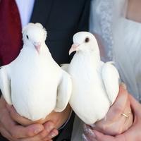 Свадьба без тамады и спецэффектов — не свадьба